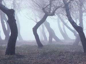 дерево геопат 10