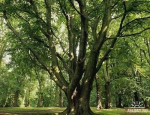 дерево геопат 22
