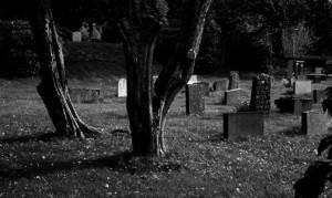 дерево кладб 1