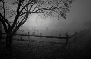 деревья кладб 4