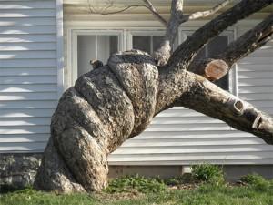 круч дерево