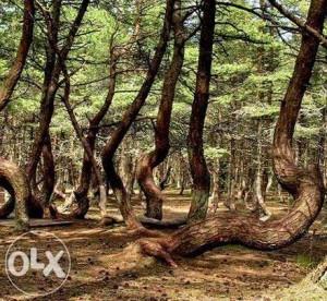 лес геопат 1