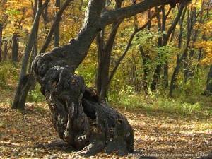 лес геопат 4