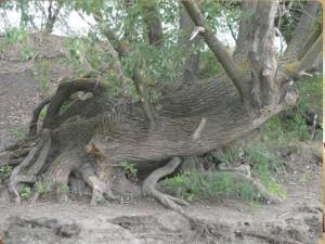 лес геопат 5